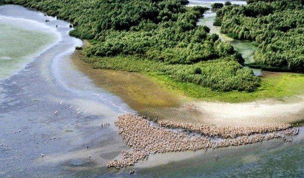 Дельта Дуная – земля болот